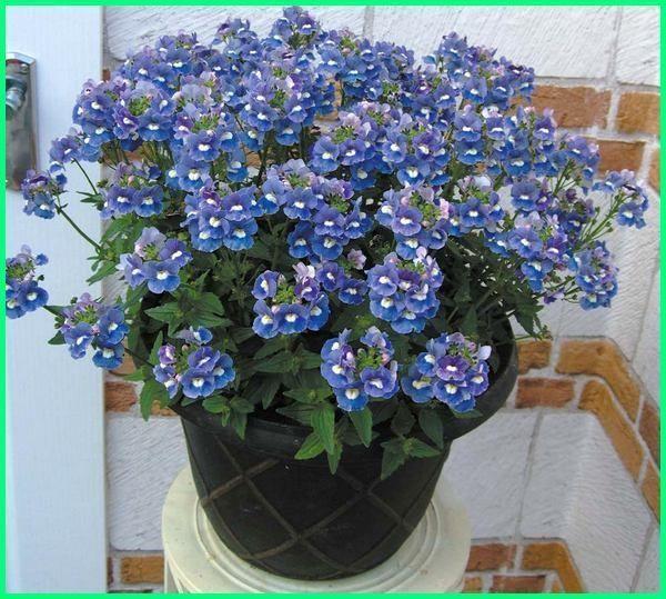 Tanaman Bunga Hias Yang Cantik Di Dalam Pot Ekor9 Com Tanaman Bunga Begonia
