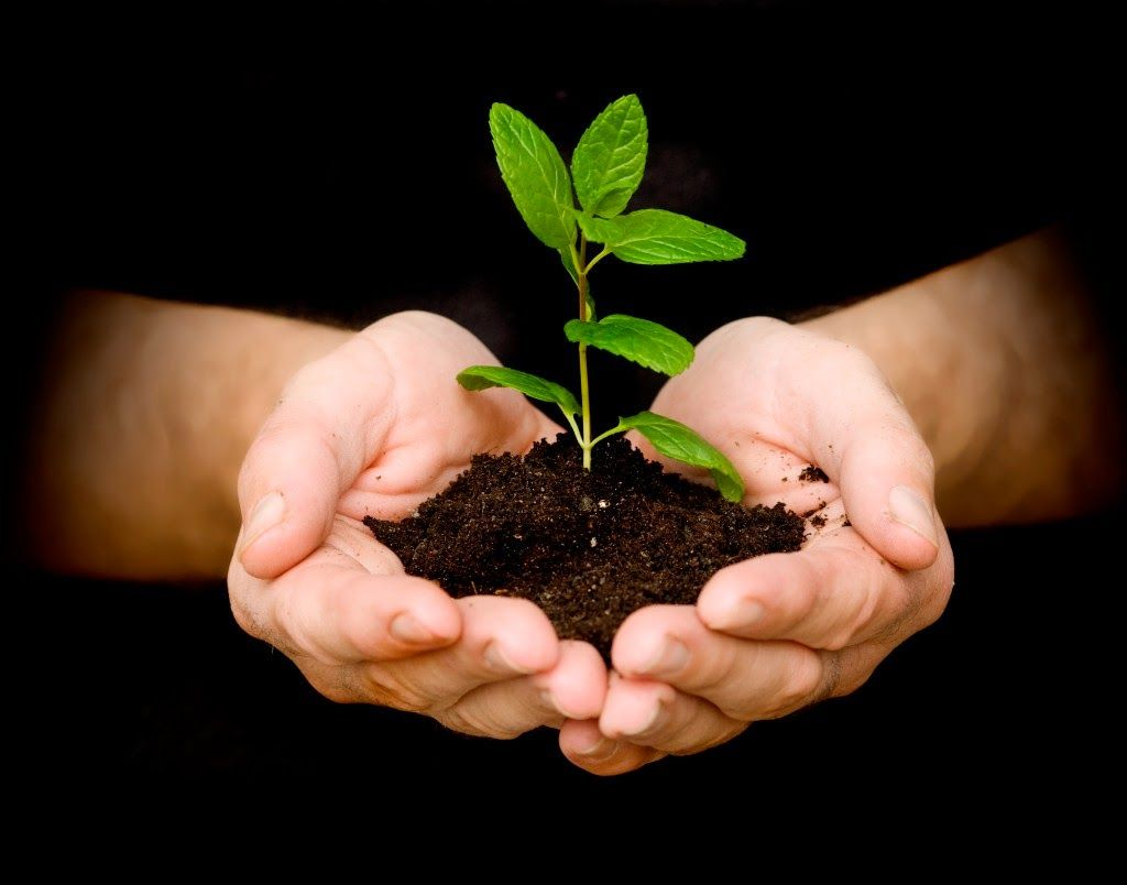 Quotes About Planting Seeds For Life Heartfelt Quotes If You Plant Honesty You Will Reap Trust