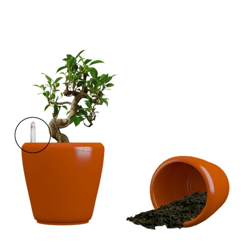 Buy flower pots and planter online Flower Pots And Planter Online