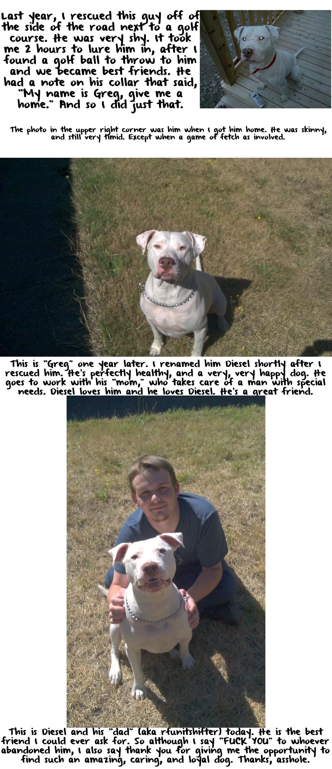 Stories with animals always make me teary.