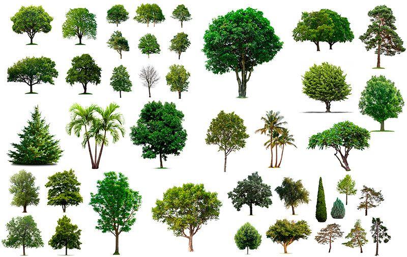 Разновидность деревьев картинки