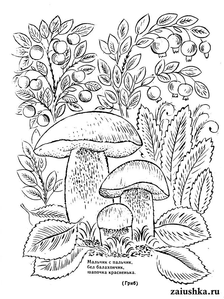 лента раскраска на тему лес грибы ягоды больница одно