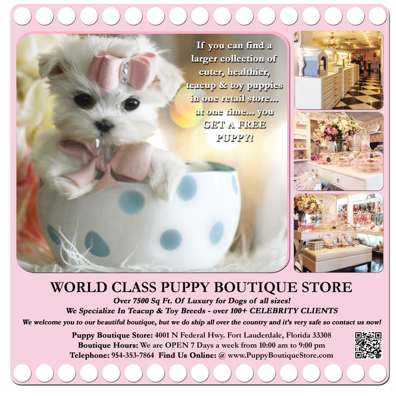 English Bulldog Puppies For Sale Buy Your English