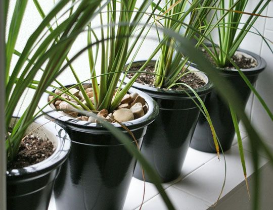 Rock Out Your House Plants Plants House Plants 400 x 300