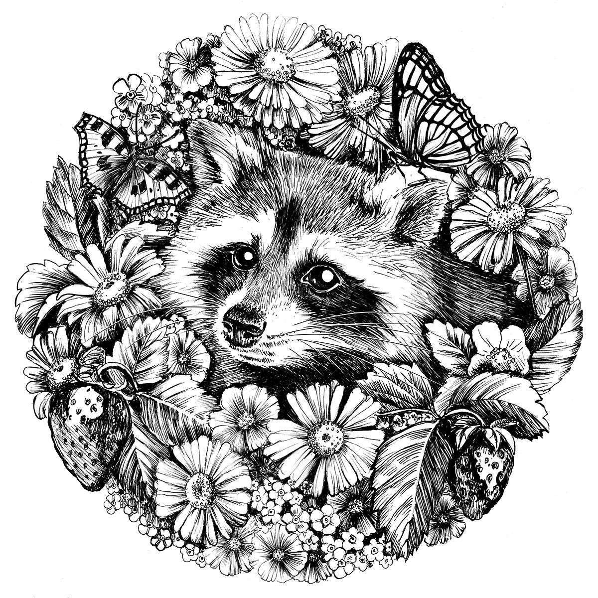 Сообщество иллюстраторов   Иллюстрация Летний енот. (с ...