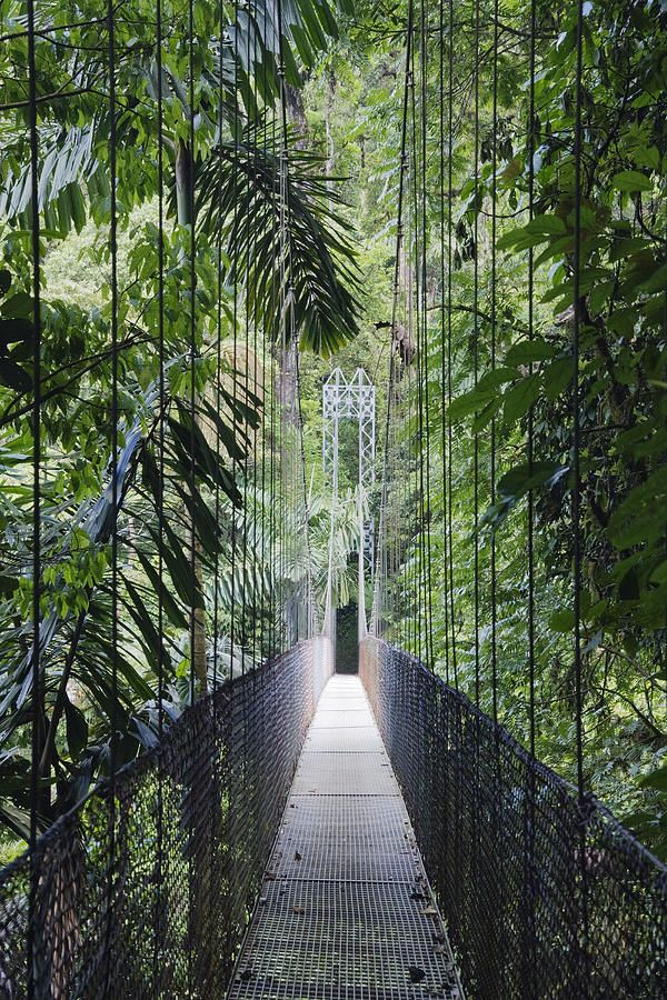 ✯ Footbridge in Costa Rican Forest