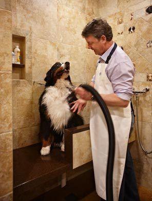 Drying Station Dog Grooming Shop Dog Grooming Salons Dog Wash