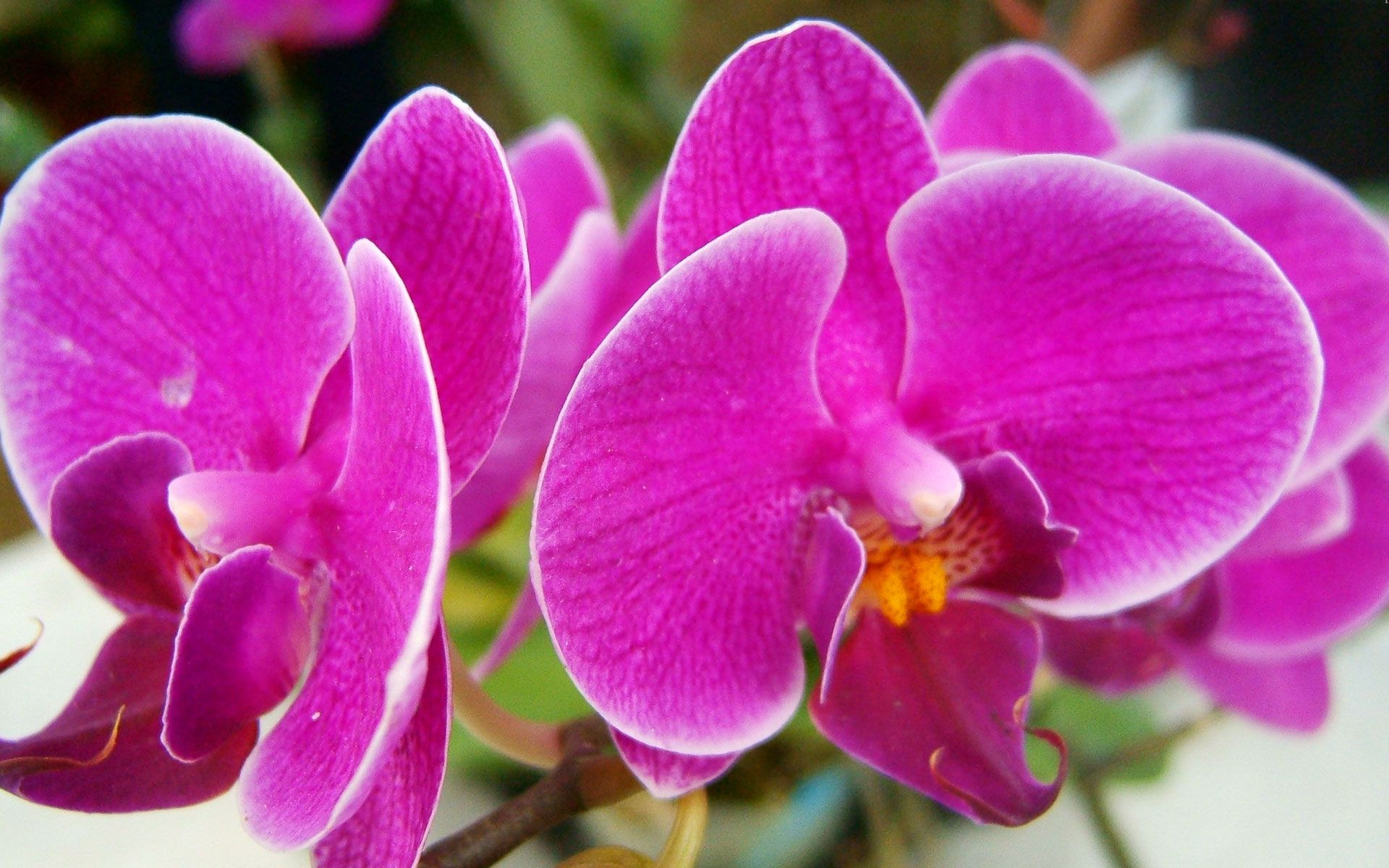 Flowers pictures flowers wallpapers hd wallpapers widescreen