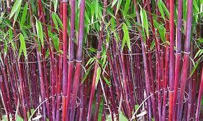 exotische pflanzen fur den garten winterhart, bildergebnis für schnellwachsende pflanzen winterhart | exotische, Design ideen