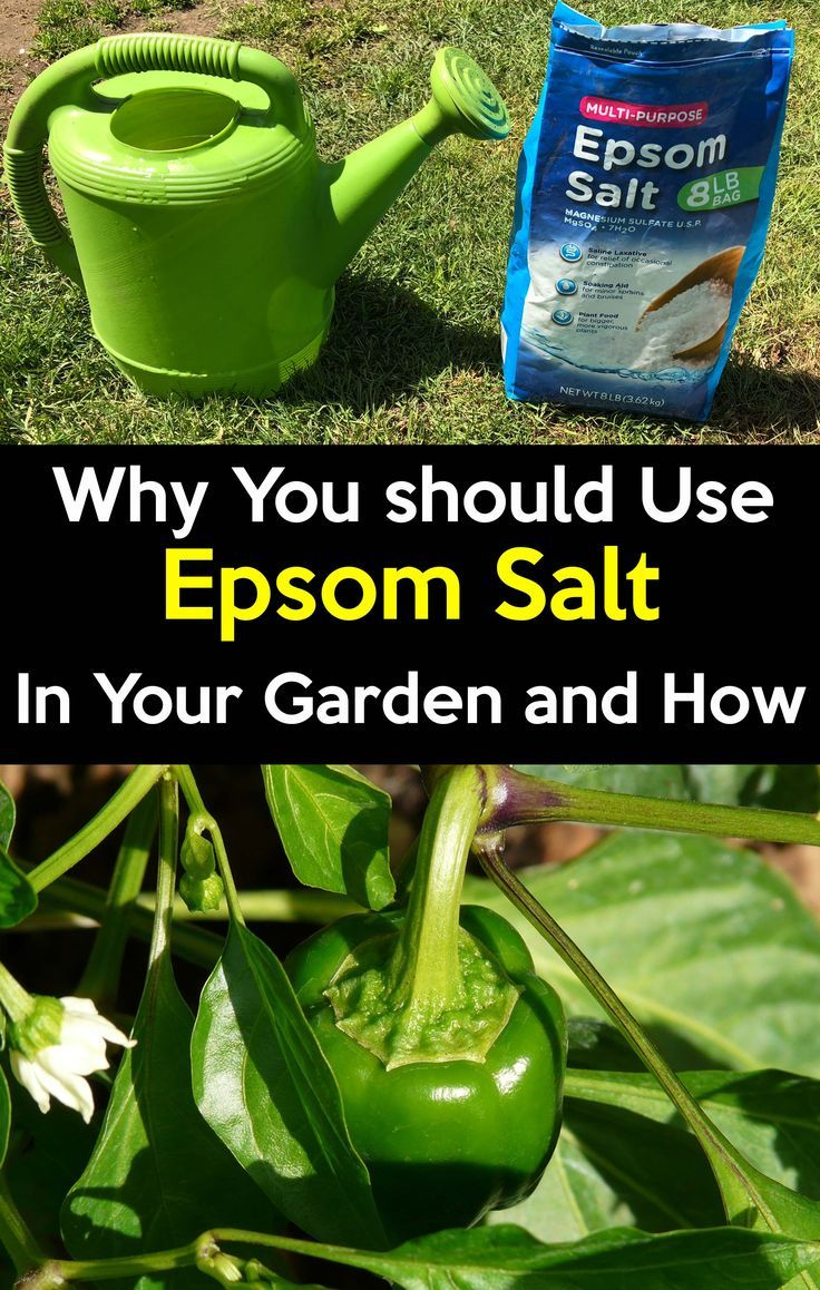 Epsom salt for plants, How to use epsom salt in the Garden and why