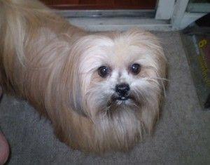 Pet Spotlight Dogs Like Tula Pinterest Dogs Pets And Pomeranian