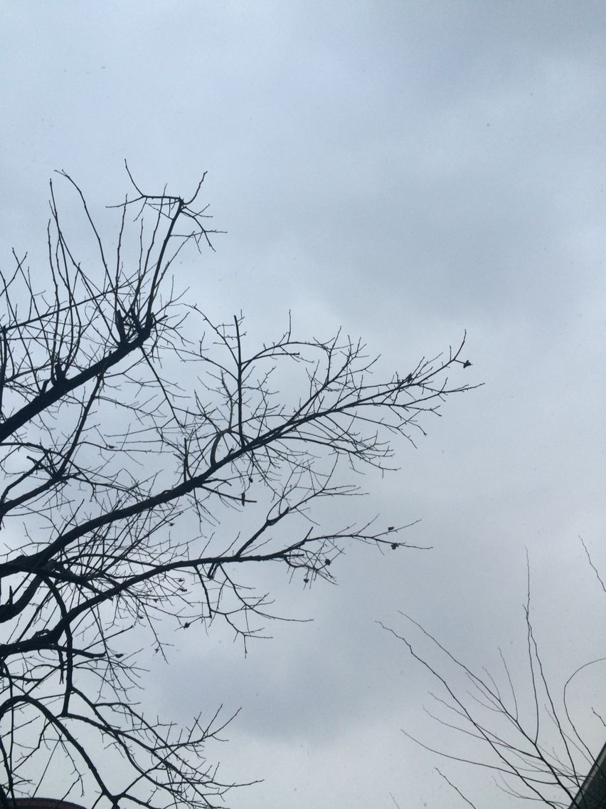 2014년 12월 12일의 하늘
