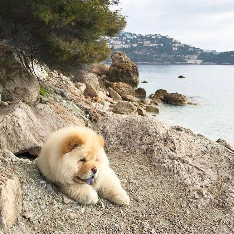 いいね!390件、コメント2件 ― Cutest Dogs On IG さん(@fluffychubbydogs)のInstagramアカウント: 「Beach  ---------------------------------------------- Tag a friend to show them this cuteness …」