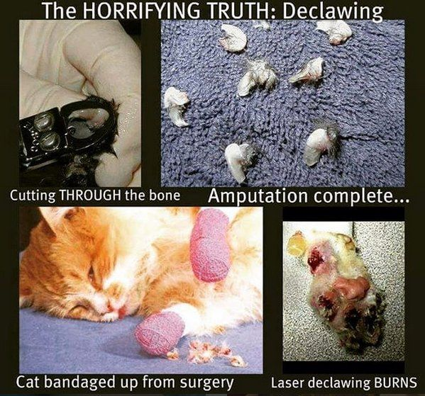 Declawing Is Good For Veterinarians But Bad For Cats Declawing