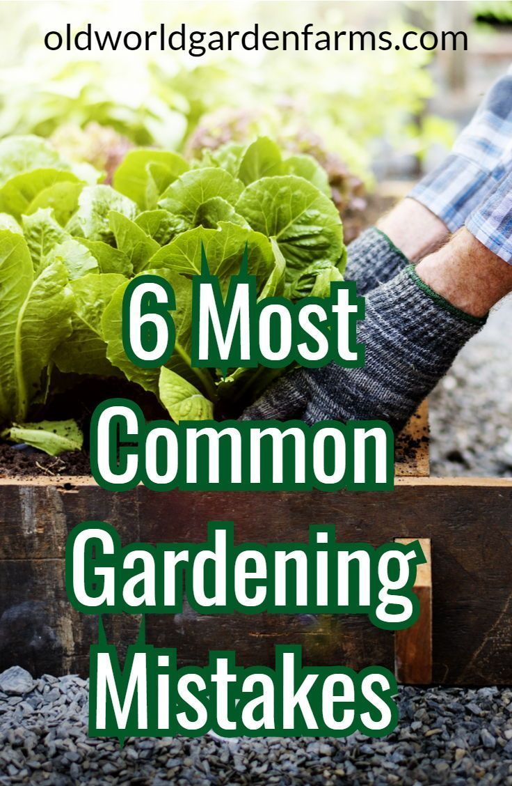 The 6 Most Common Gardening Mistakes New Gardeners Make 640 x 480
