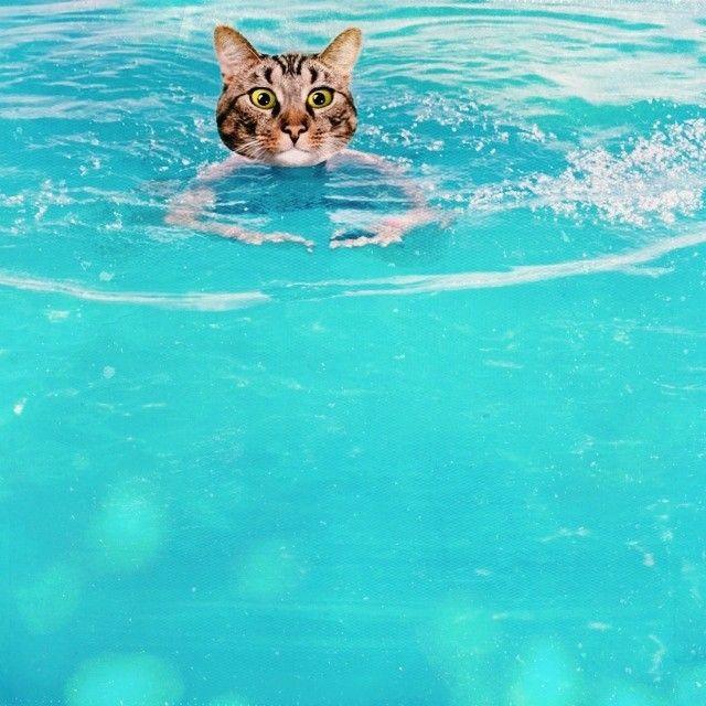 swimming kitty