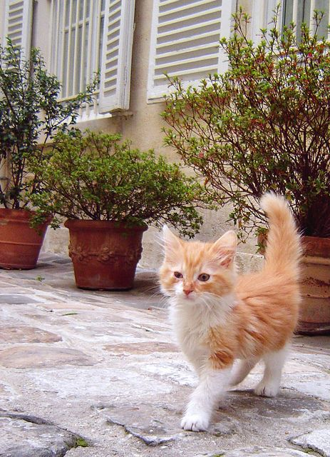Pomelo's promenade    in which a kitten explores The Great Outdoors. Of Paris...