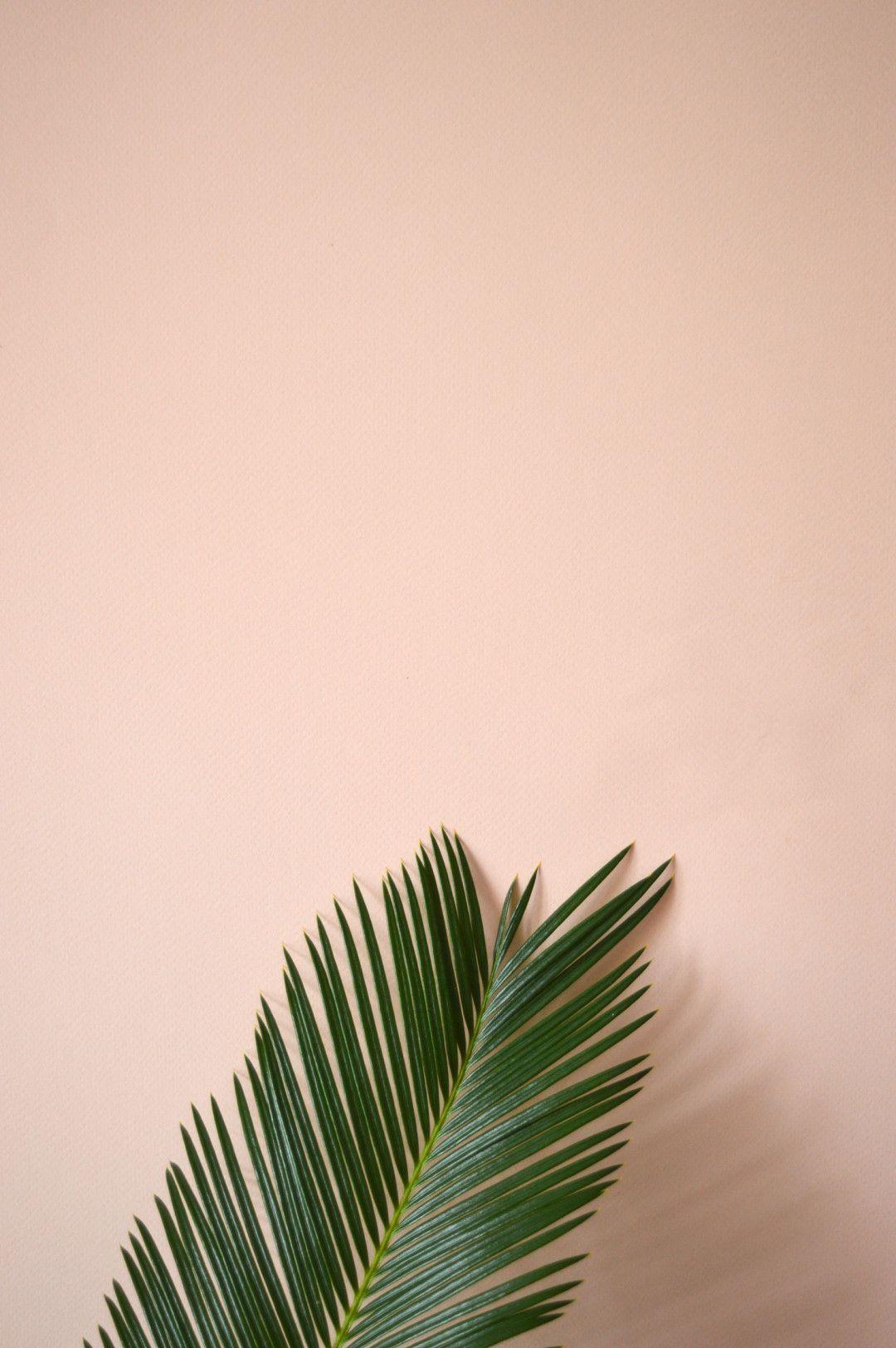 Pinterest L Hongphetc Plant Wallpaper Plants Plant Aesthetic