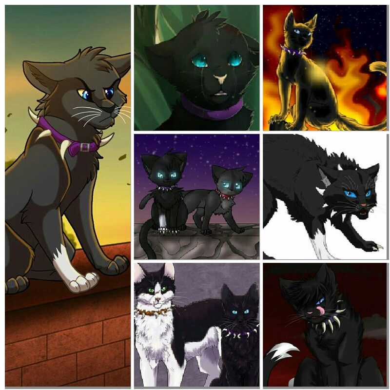 Scrouge meh fave warrior cat )D Scrouge D Pinterest