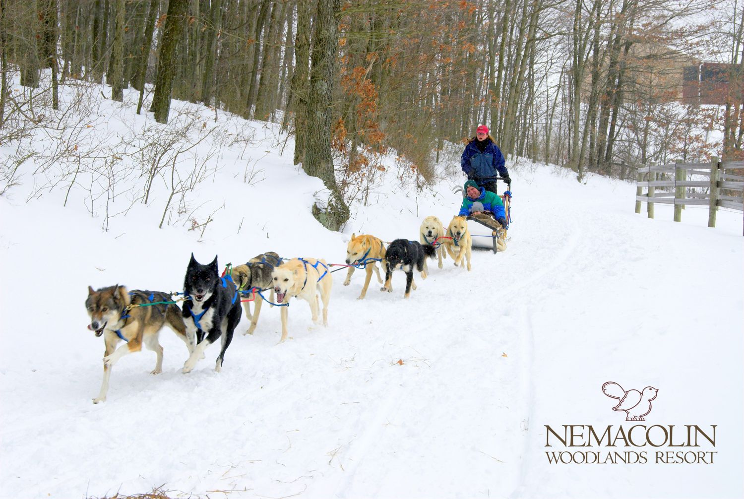 Meet Nemacolin S Exclusive Team Of Sled Dogs Dog Sledding Winter Activities Winter Outdoors