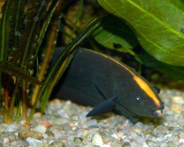 Aquariumdomain Com Fish Pet Pisces Fish Fish