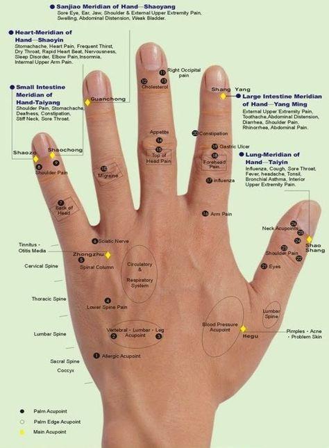 Aculife Tiens   Hand reflexology, Reflexology hand chart ...