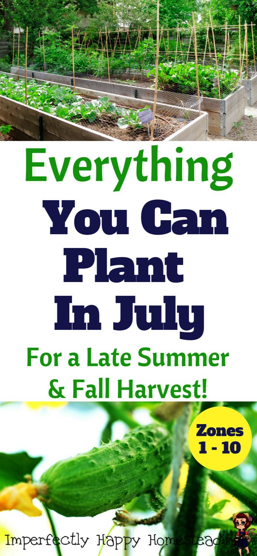 Greenhouse Gardening Tips For Beginners Gardening Tips In Tamil In 2020 Fall Garden Vegetables Organic Gardening Tips Fall Vegetables
