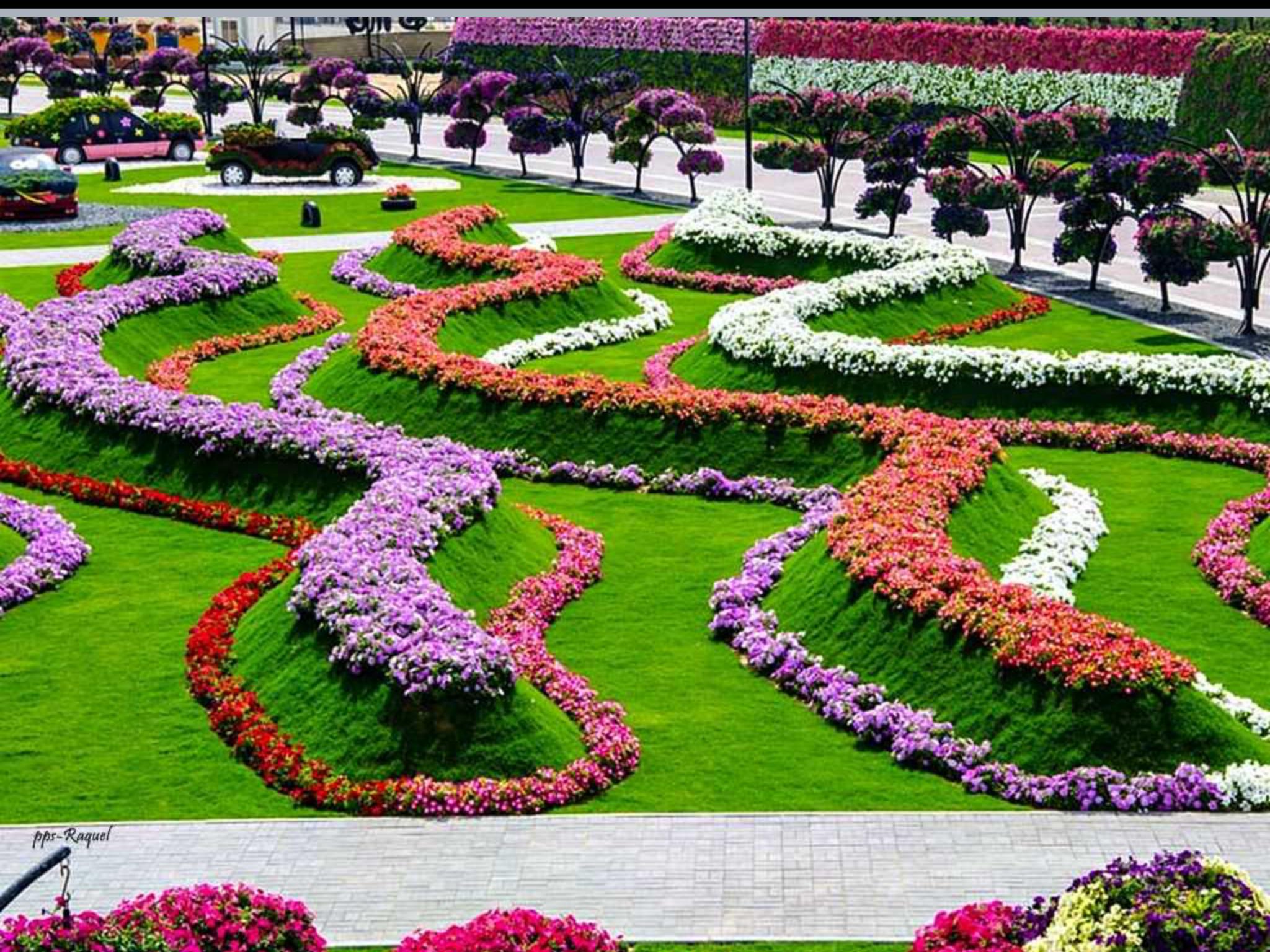 Pin by Booguy on Dubaï Miracle garden, Dubai garden