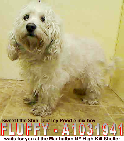 Critical Small Dogs At Nyc Acc Shelters Must Love Dogs Safe With Me Dog Safe Cool Pets Animal Lover