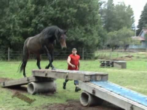 Horse agility course.  He loves it! So cute. - I WANT ONE OF THESE For my horse!!!