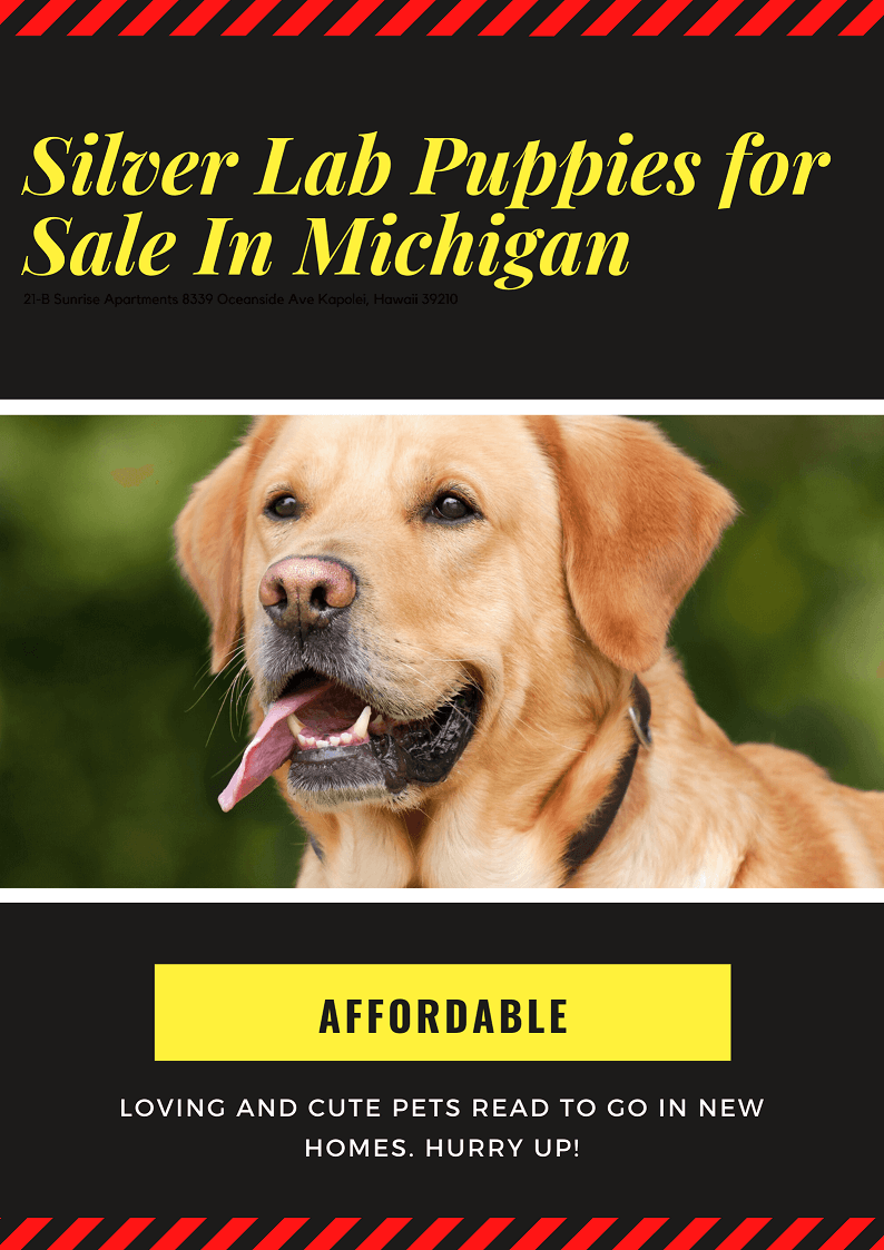 Silver lab puppies for sale in Michigan is directly linked