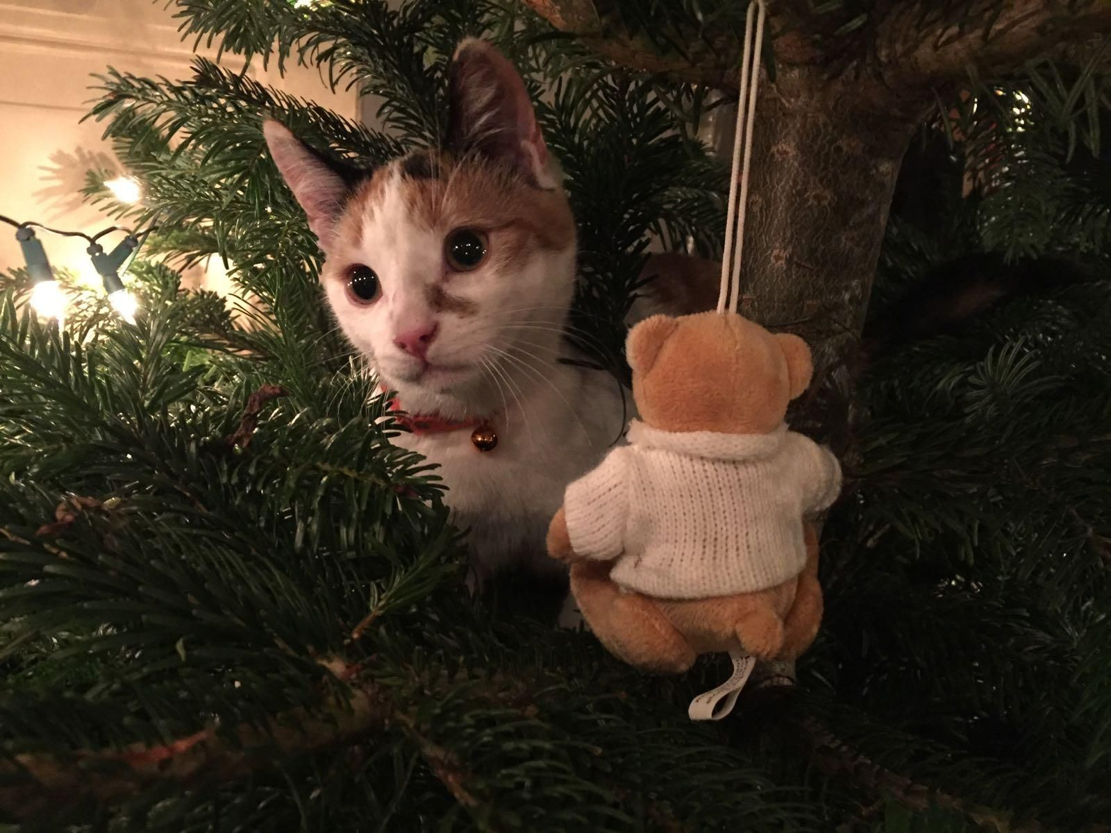 First Christmas for this little fella http://ift.tt/2hixVUW