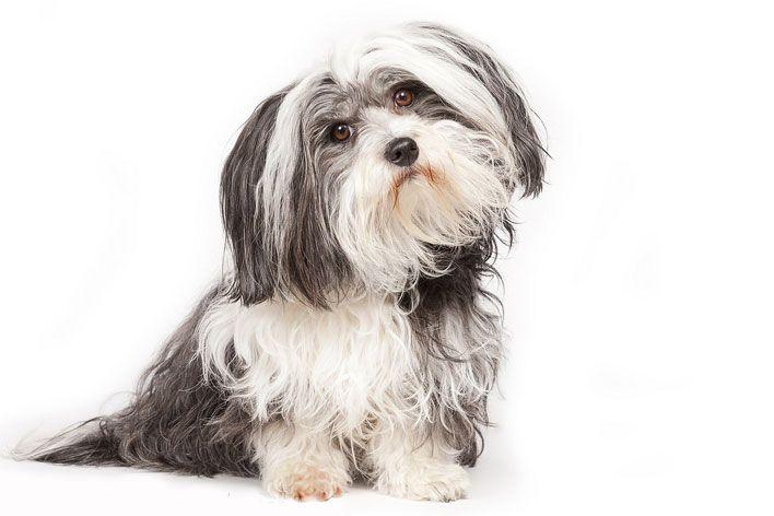 12 Perguntas Mais Comuns Sobre Cadela no Cio