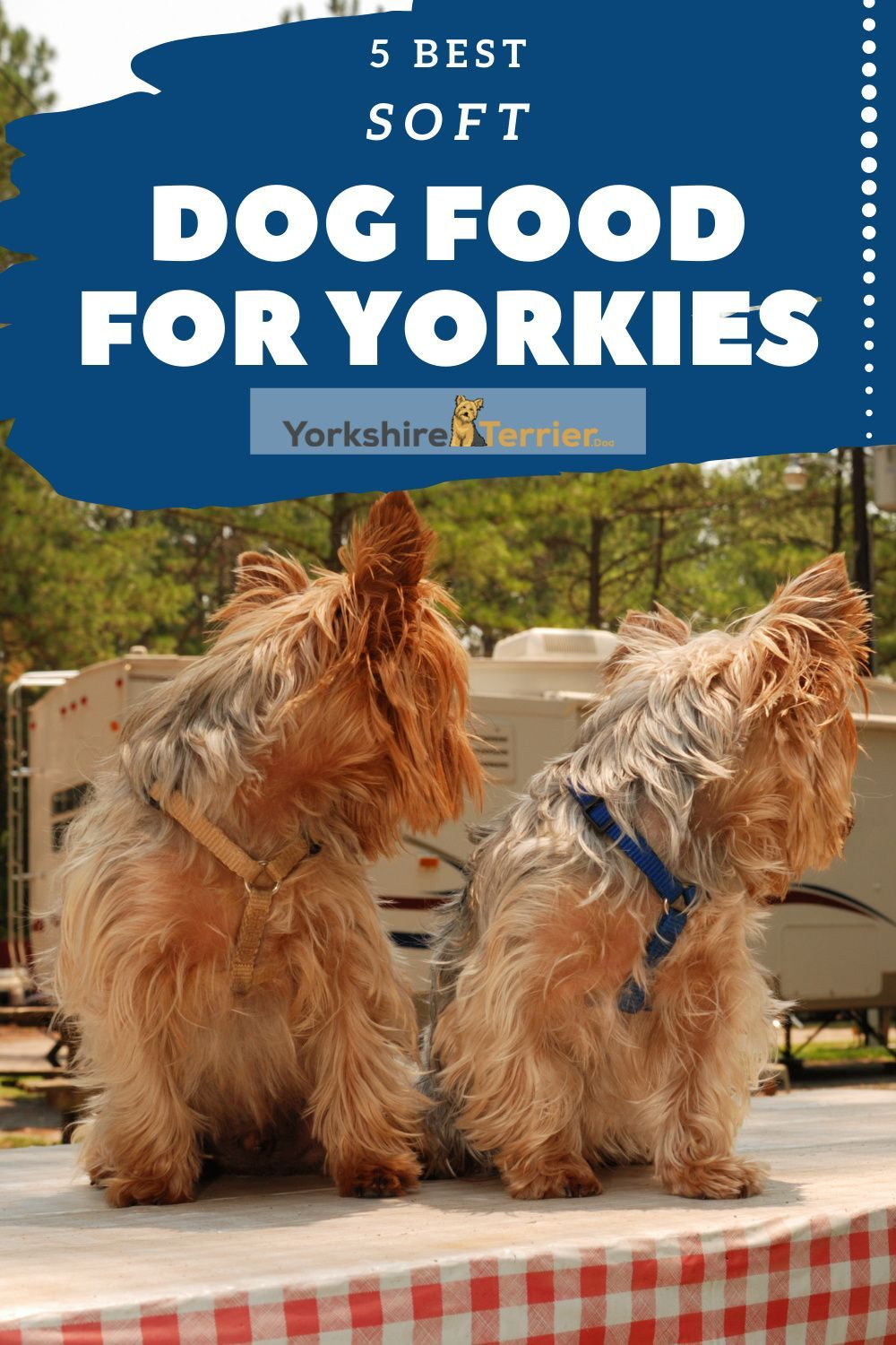 5 Best Soft Dog Food For Yorkies Across Life Stages In 2020 Dog Food Recipes Wet Dog Food Best Dog Food
