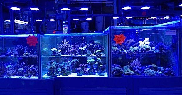 Fish Stores Aquarium Store Aquarium Design Saltwater Aquarium