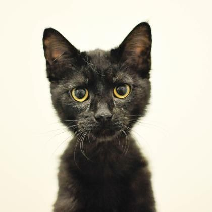Sister MC is a curious kitten who is available for