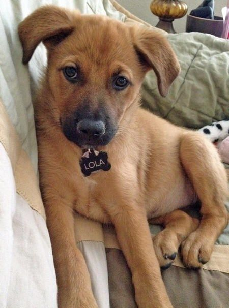 75 Cute Mixed Breed Dogs You Need To Know About Puppies Unique