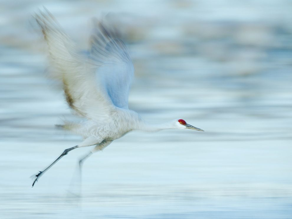 Nice pic! The white of the #crane is mixed with the white of the water and the white of sky!