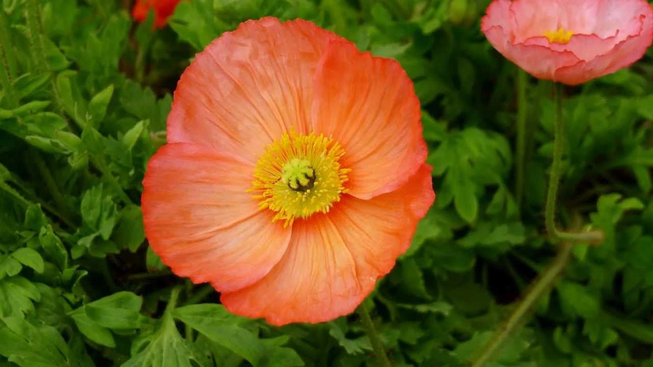 ERNESTO CORTAZAR - MI AMOR POR TI - FLOWERS FOR YOU
