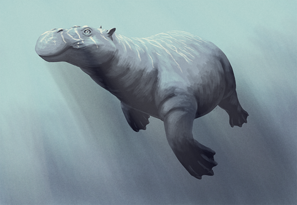 Neoparadoxia cecilialina, a desmostylian marine mammal from the late  Miocene (~10 mya) of California. Known… | Prehistoric animals, Ancient  animals, Extinct animals