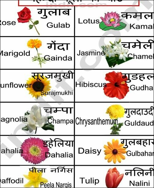 Hindi Flowers Chart Flower Chart Hindi Language Learning Hindi Alphabet