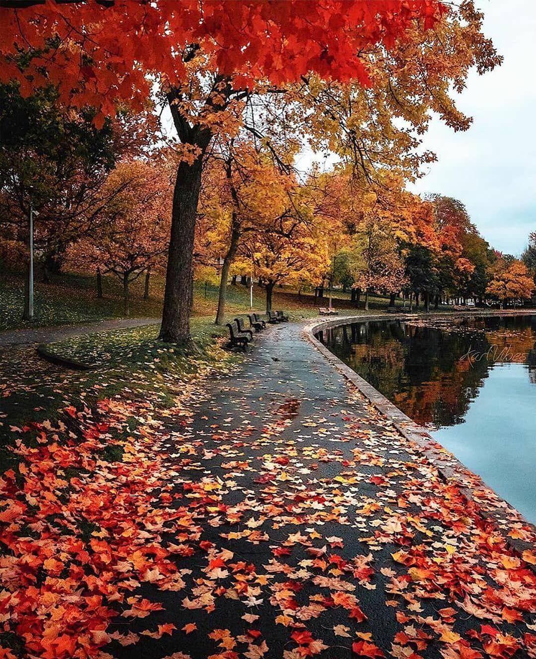 Last Autumn Vibes Autumn Landscape Autumn Scenery Autumn Photography