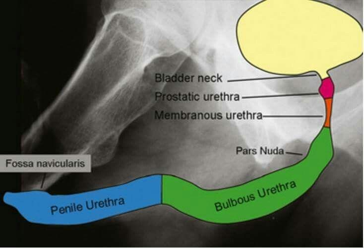 pierderea în greutate x ray