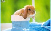 da bunny!!!
