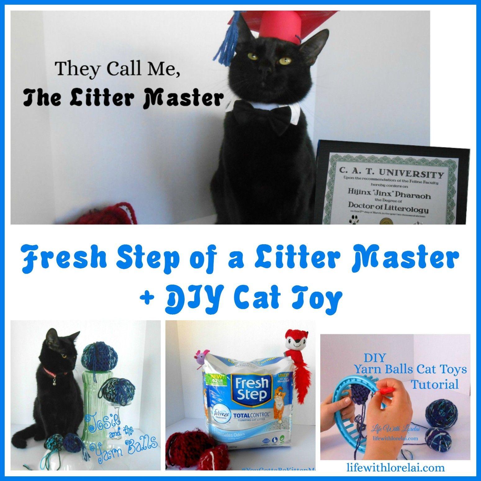 Cat Urine Cleaning Solution Recipe Cat toys, Diy cat