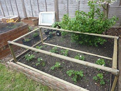 Protecting Strawberries From Birds Fruit Vegetable Garden Ideas Pinterest Gardens Cold