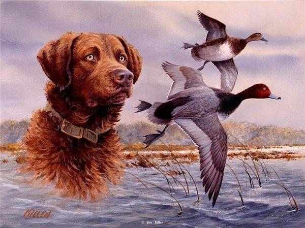 Gallery Ru Foto 1 Ohota Rybalka Loraroza Sporting Dogs Dogs Dog Artwork