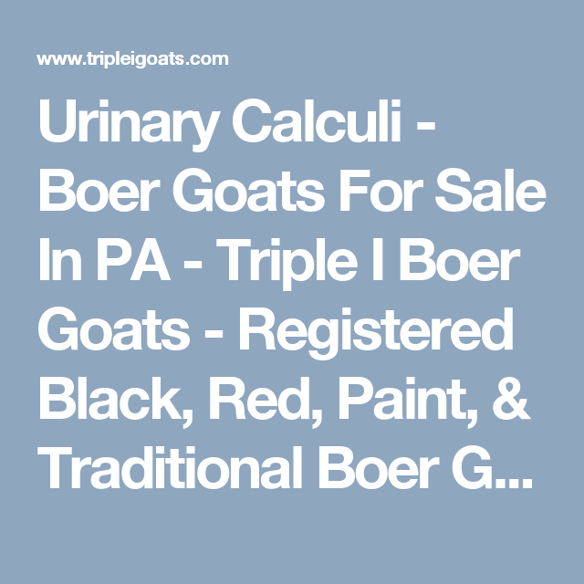 Urinary Calculi - Boer Goats For Sale In PA - Triple I Boer