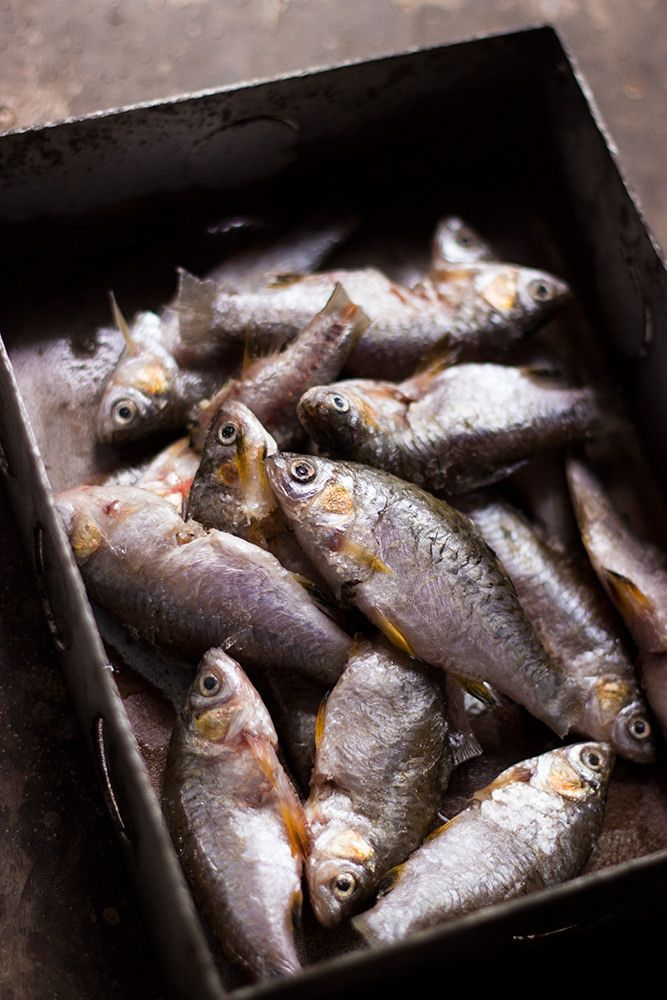 Small Fresh Water Fishes Mariscos