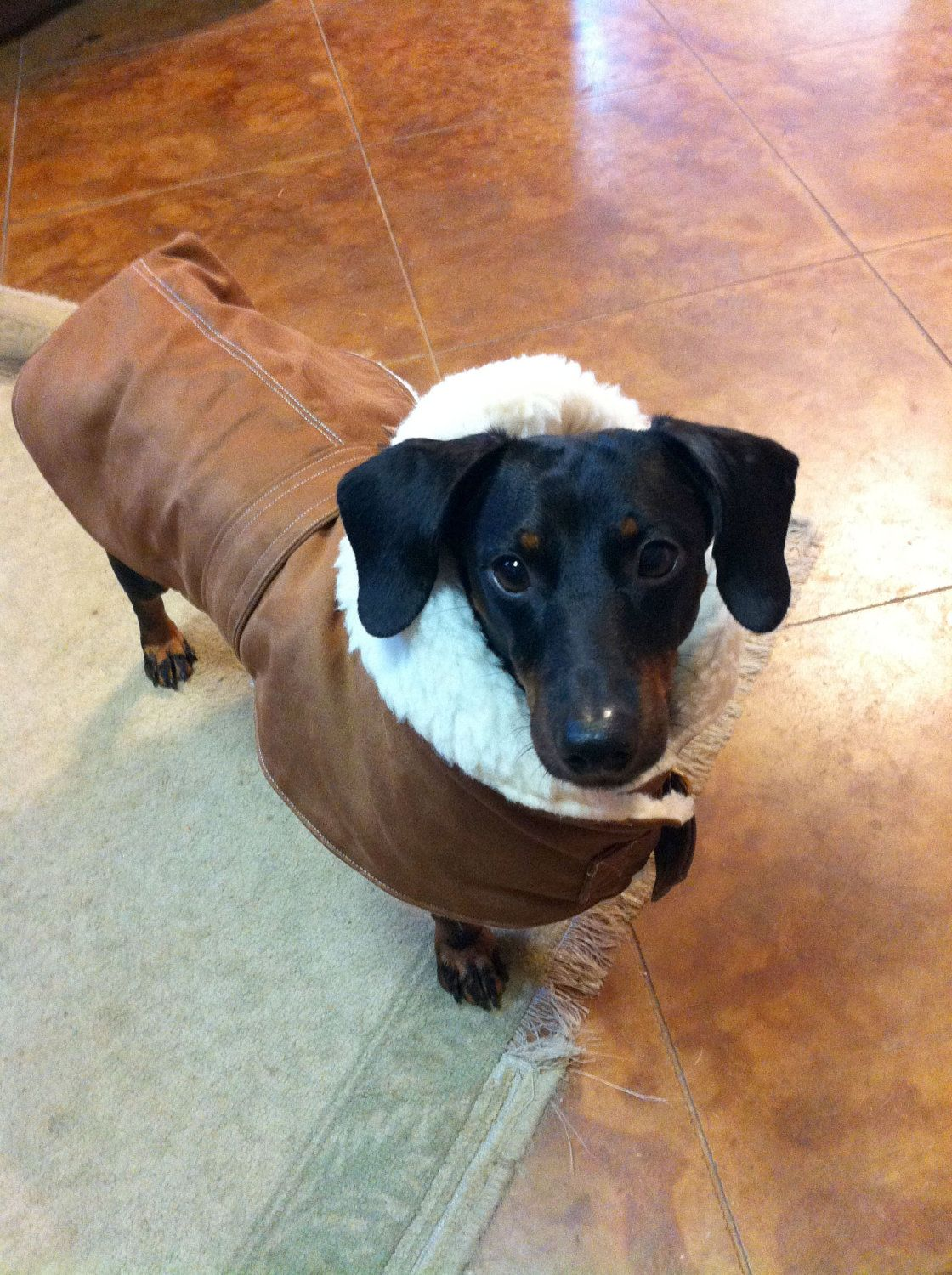 Sherpa Dog Coat With Hoodie 60 00 Via Etsy Dog Coats Dogs